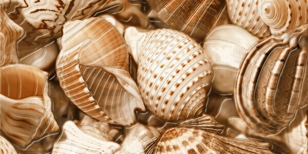 Декор Sea Breeze Shells (2) 300x600